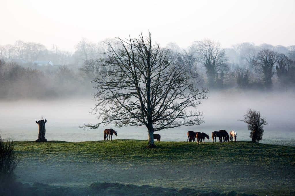 Horses-in-Field-Irish-Countryside-fog