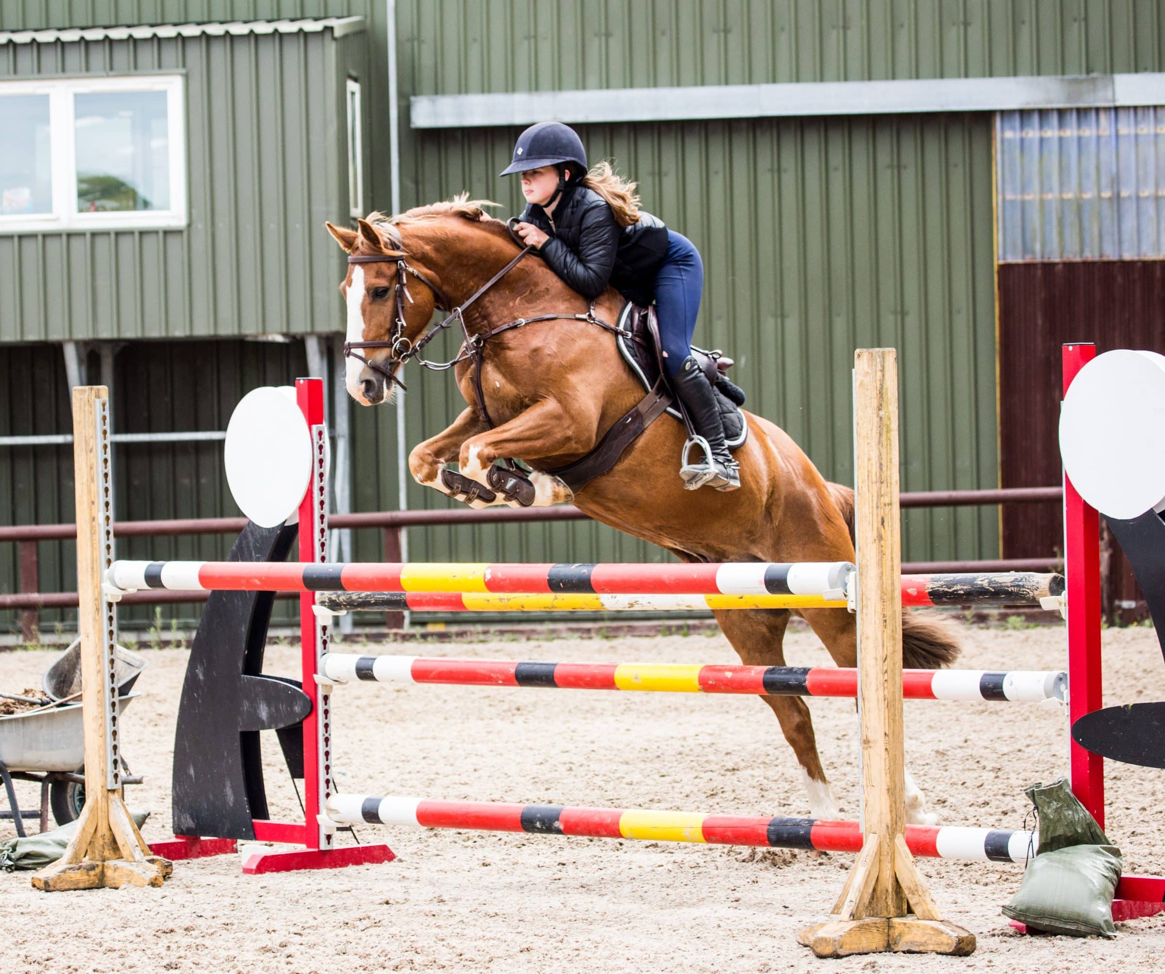 Horses-and-Ponies-for-Sale-Jumper-Eventer-Top-Pony