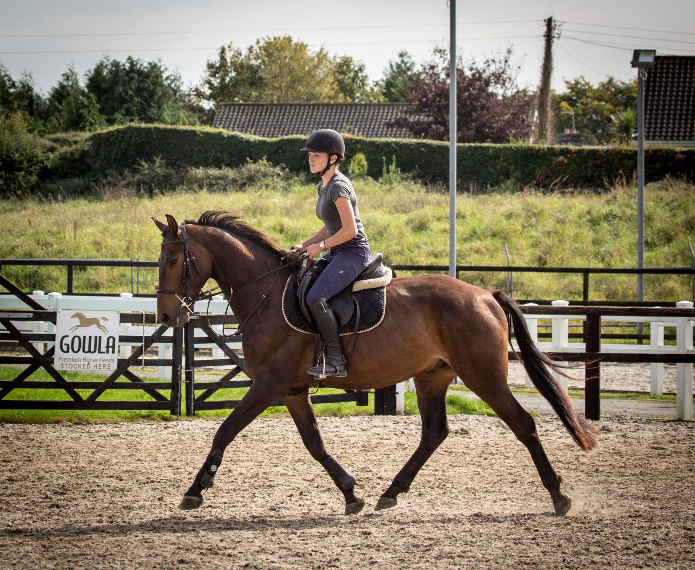 Horses-for-sale-Irish-Sporthorse-Allrounder-Jumper-Eventer-Dressage